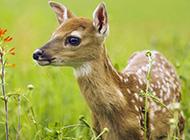 动物世界南海子麋鹿苑高清图片
