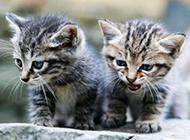 可爱小猫咪图片高清摄影