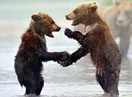 可爱迷人的动物高清摄影