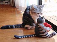寻找亮点图片之可爱的猫