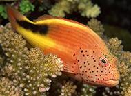 奇幻海底动物世界