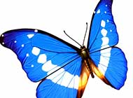 美丽七彩翅膀 花蝴蝶