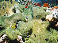 神秘奇幻的海底世界图片