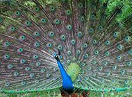 美丽绚丽的鸟类高清唯美图片