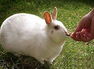 盘点地球上最胖的动物们