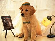 可爱小狗狗图片呆萌宠物高清壁纸