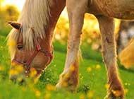 各种各样的马精选高清图片