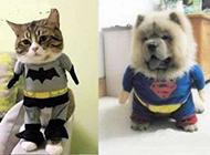 动物爆笑趣图之换装秀