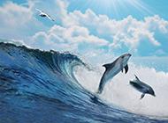 中华白海豚调皮与海浪嬉戏高清风景壁纸