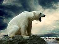 憨态可掬的北极熊图片