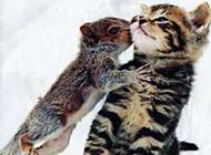 动物搞怪图片之老鼠爱上猫