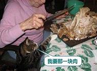 胖猫咪囧图片之我要吃肉肉