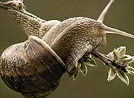 高清蜗牛唯美生活欣赏