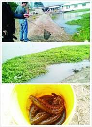 男子在秦淮河放生千条黑鱼引来数十市民抢捞