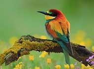 鸟语花香的春日浪漫自然界风景