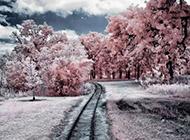 LOMO意境冬天雪景风景壁纸