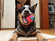 搞笑可爱的狗狗微笑图片