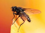 昆虫苍蝇图片桌面壁纸