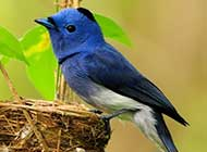 春天里可爱的小鸟