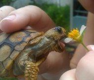吃素食的乌龟