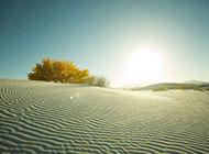新疆戈壁沙漠绿洲图片风景壁纸