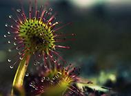 下雨天植物水滴风景图片