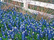 花草树木自然风景图片