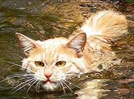 萌猫搞笑表情:表情帝