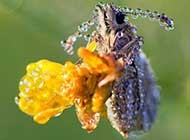 色彩艳丽的昆虫图集