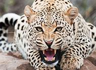 大自然可爱动物壁纸图片大全