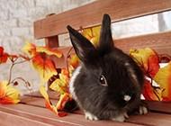 可爱温顺的小兔子图片大全