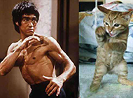 最新恶搞图片之李小龙转世的猫