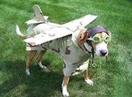 淡定搞笑动物图之酷帅的飞行员