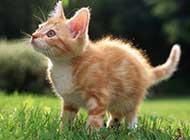 可爱毛绒猫宝宝