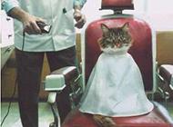 动物搞笑瞬间图片之我是宇宙帅猫