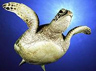 海龟兔子高清动物图片合集