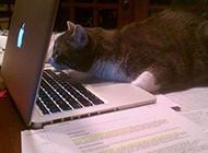 世界上奇葩猫咪图片