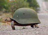 穿防弹衣的乌龟图片