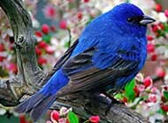 恋上美丽花儿的小鸟高清桌面壁纸