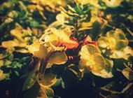 唯美秋天风景图片壁纸