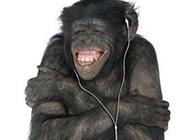 搞笑大猩猩头像图片之流行歌曲就是棒