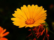 美丽的植物特写壁纸欣赏