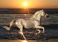 草原里的白色骏马高清精选壁纸