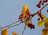 新疆库尔勒的秋天