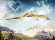 大海边自由翱翔的唯美海鸥图片