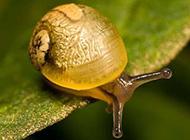 自然界可爱昆虫坚强的蜗牛