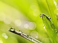 天清气朗的夏日植物露珠高清图片