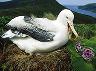 五彩斑斓的鸟类图片合集