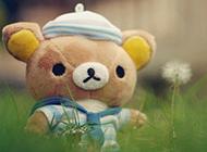 爱不释手的玩偶小熊图片