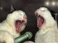 爆笑猫咪激情嗨歌图片